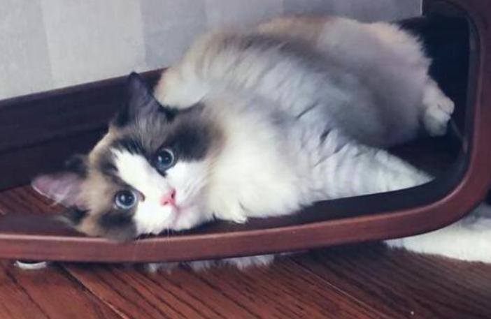 """有这5种表现的猫咪说明""""很聪明"""" 快来看看吧!"""